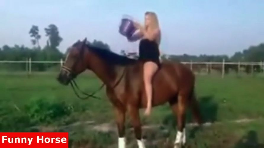 Funny Horse Videos Compilation Little Pony in Real Life #4