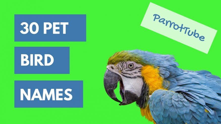 Pet Bird Names Top 30 Parrottube Cool Animal Video